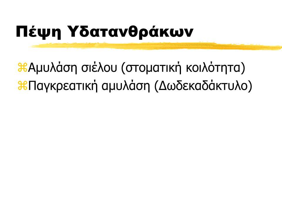 Πέψη Υδατανθράκων zΑμυλάση σιέλου (στοματική κοιλότητα) zΠαγκρεατική αμυλάση (Δωδεκαδάκτυλο)