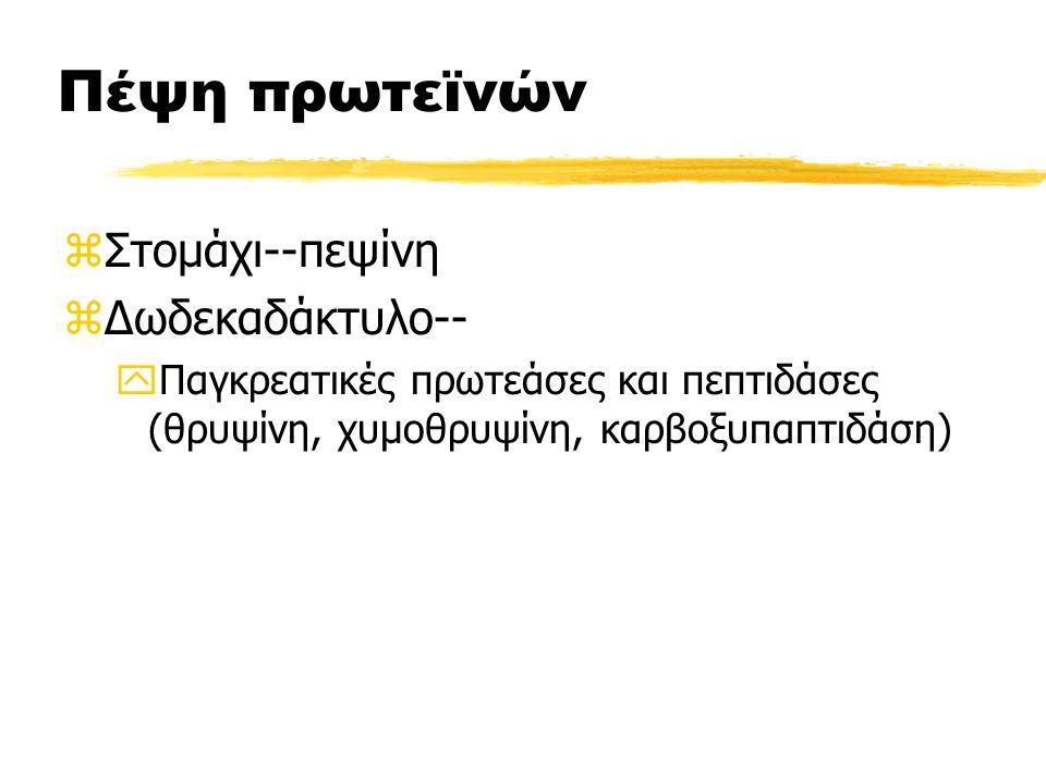 Πέψη πρωτεϊνών zΣτομάχι--πεψίνη zΔωδεκαδάκτυλο-- yΠαγκρεατικές πρωτεάσες και πεπτιδάσες (θρυψίνη, χυμοθρυψίνη, καρβοξυπαπτιδάση)