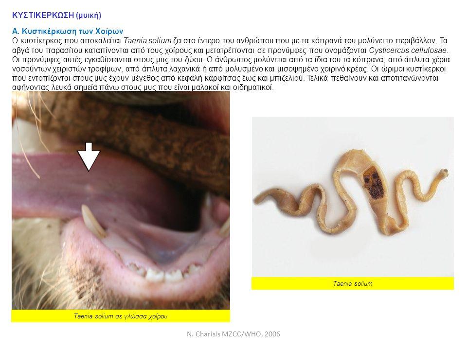 N. Charisis MZCC/WHO, 2006 ΚΥΣΤΙΚΕΡΚΩΣΗ (μυική) Α. Κυστικέρκωση των Χοίρων Ο κυστίκερκος που αποκαλείται Taenia solium ζει στο έντερο του ανθρώπου που