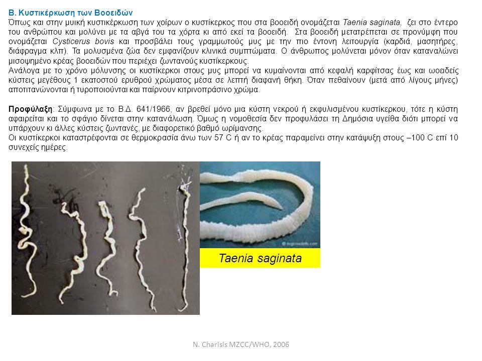 N. Charisis MZCC/WHO, 2006 Β. Κυστικέρκωση των Βοοειδών Όπως και στην μυική κυστικέρκωση των χοίρων ο κυστίκερκος που στα βοοειδή ονομάζεται Taenia sa