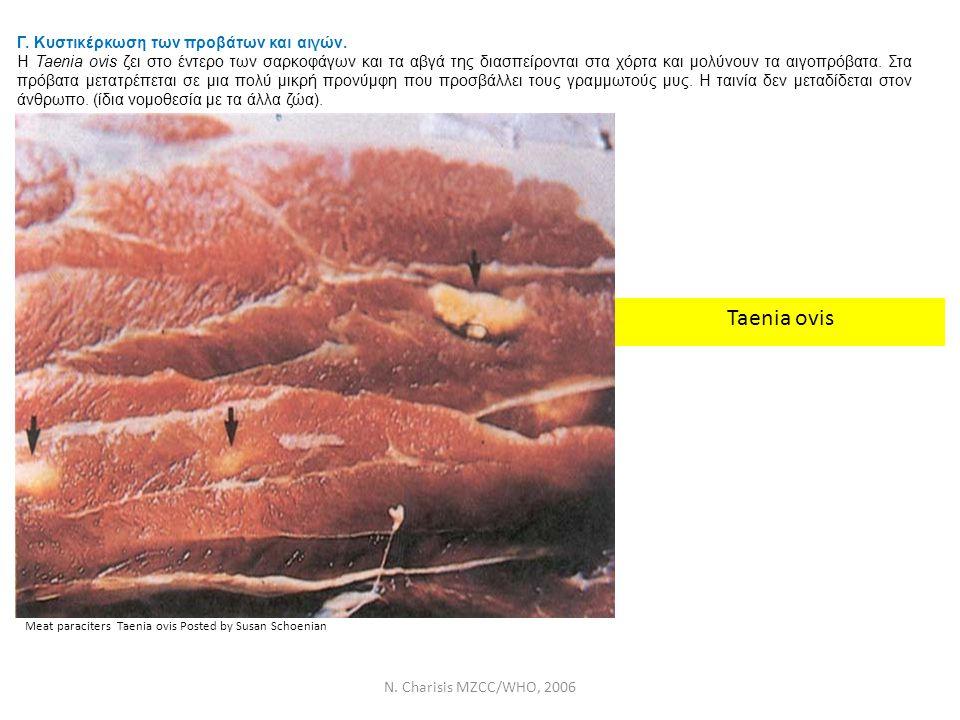 N. Charisis MZCC/WHO, 2006 Γ. Κυστικέρκωση των προβάτων και αιγών. Η Taenia ovis ζει στο έντερο των σαρκοφάγων και τα αβγά της διασπείρονται στα χόρτα