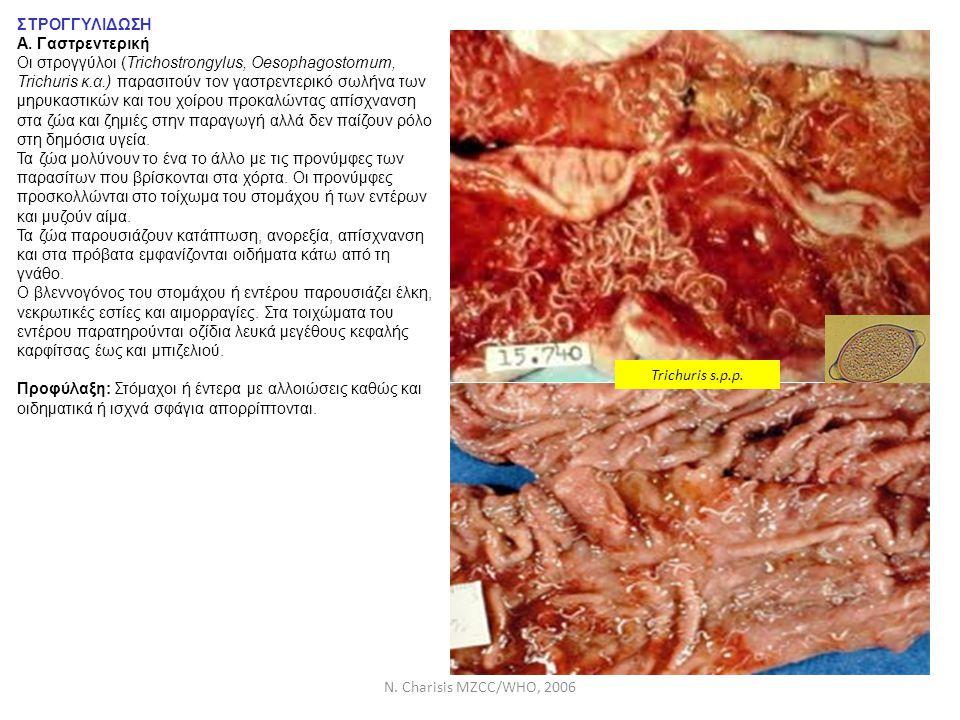 N. Charisis MZCC/WHO, 2006 ΣΤΡΟΓΓΥΛΙΔΩΣΗ Α. Γαστρεντερική Οι στρογγύλοι (Trichostrongylus, Oesophagostomum, Trichuris κ.α.) παρασιτούν τον γαστρεντερι