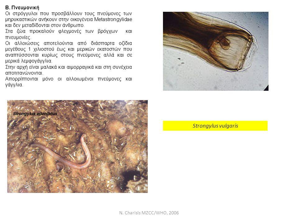 N. Charisis MZCC/WHO, 2006 Β. Πνευμονική Οι στρόγγυλοι που προσβάλλουν τους πνεύμονες των μηρυκαστικών ανήκουν στην οικογένεια Metastrongylidae και δε