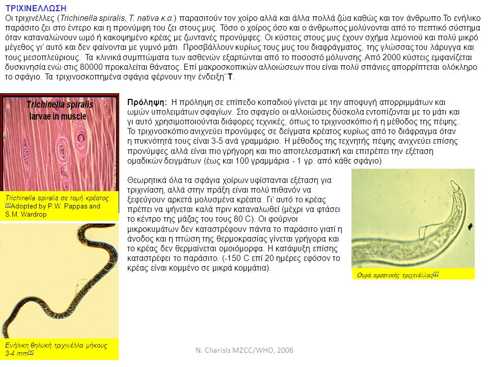 N. Charisis MZCC/WHO, 2006 ΤΡΙΧΙΝΕΛΛΩΣΗ Οι τριχινέλλες (Trichinella spiralis, T. nativa κ.α.) παρασιτούν τον χοίρο αλλά και άλλα πολλά ζώα καθώς και τ