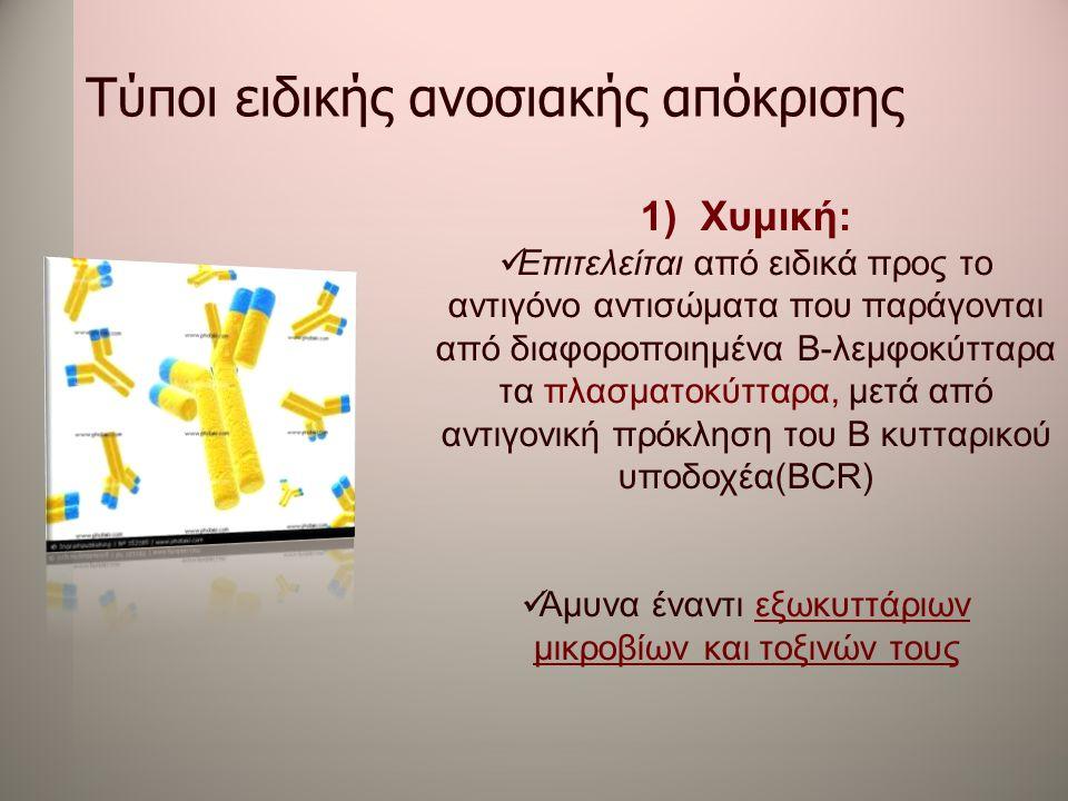 Τύποι ειδικής ανοσιακής απόκρισης 1)Χυμική:  Επιτελείται από ειδικά προς το αντιγόνο αντισώματα που παράγονται από διαφοροποιημένα Β-λεμφοκύτταρα τα