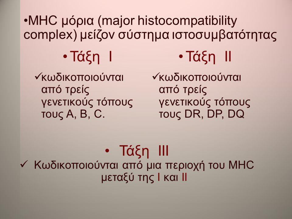 •MHC μόρια (major histocompatibility complex) μείζον σύστημα ιστοσυμβατότητας •Τάξη І  κωδικοποιούνται από τρείς γενετικούς τόπους τους A, B, C. •Τάξ