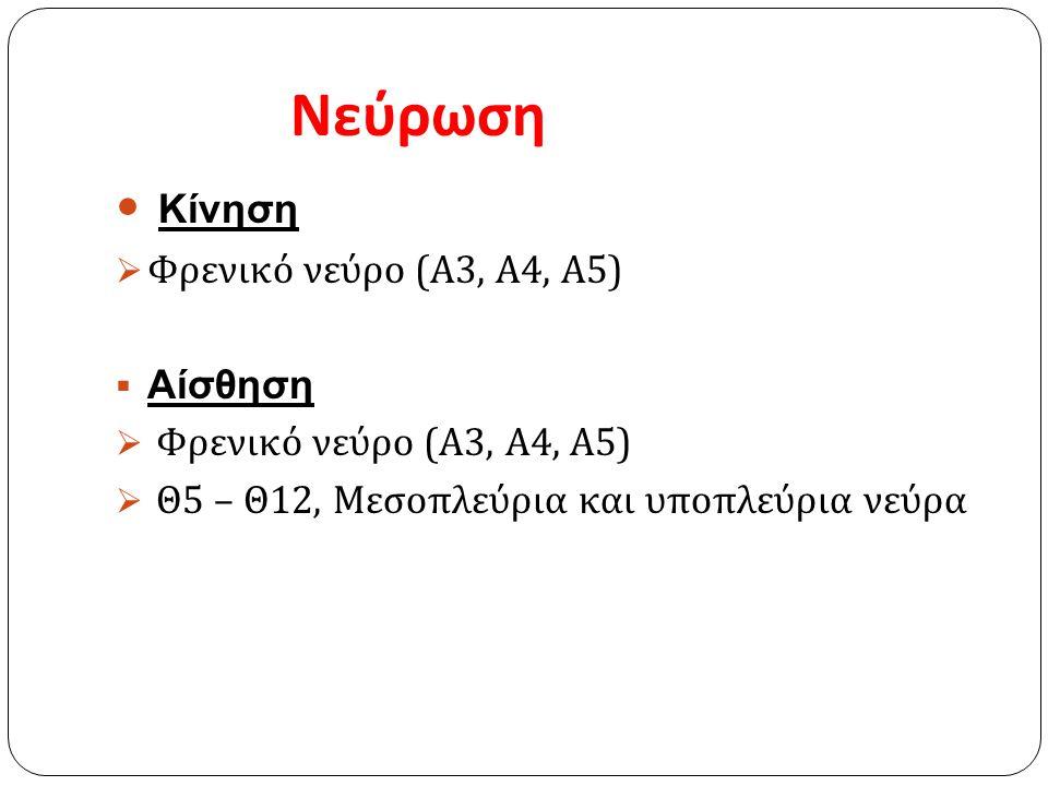 Νεύρωση  Κίνηση  Φρενικό νεύρο ( Α 3, Α 4, Α 5)  Αίσθηση  Φρενικό νεύρο ( Α 3, Α 4, Α 5)  Θ 5 – Θ 12, Μεσοπλεύρια και υποπλεύρια νεύρα