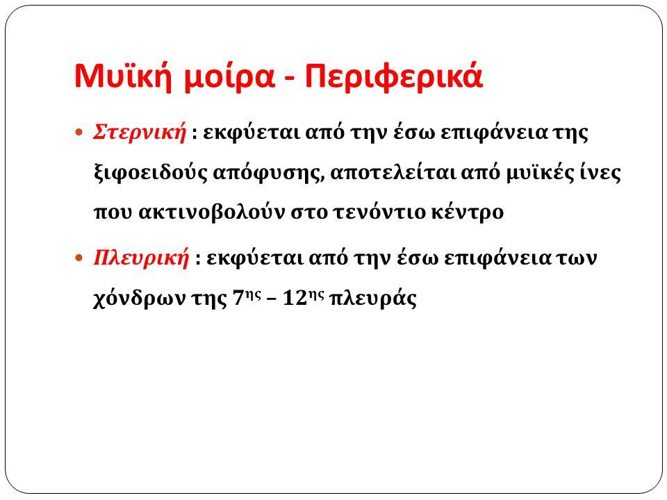 Μυϊκή μοίρα – οπίσθια  Έσω σκέλος  Δεξιό έσω σκέλος : σώματα των Ο1 – Ο4  Αριστερό έσω σκέλος : σώματα των Ο1 – Ο3 • Έξω σκέλος – 2 τόξα  Έσω τοξοειδή σύνδεσμο ή τόξο του ψοίτη ή έσω οσφυοπλευρικό τόξο (σώμα Ο1 → εγκάρσια απόφυση του Ο1 – Ο2)  Έξω τοξοειδής σύνδεσμος ή τόξο του τετράγωνου οσφυϊκού ή έξω οσφυοπλευρικό σύνδεσμο (εγκάρσια απόφυση του Ο1 →12 η πλευρά)