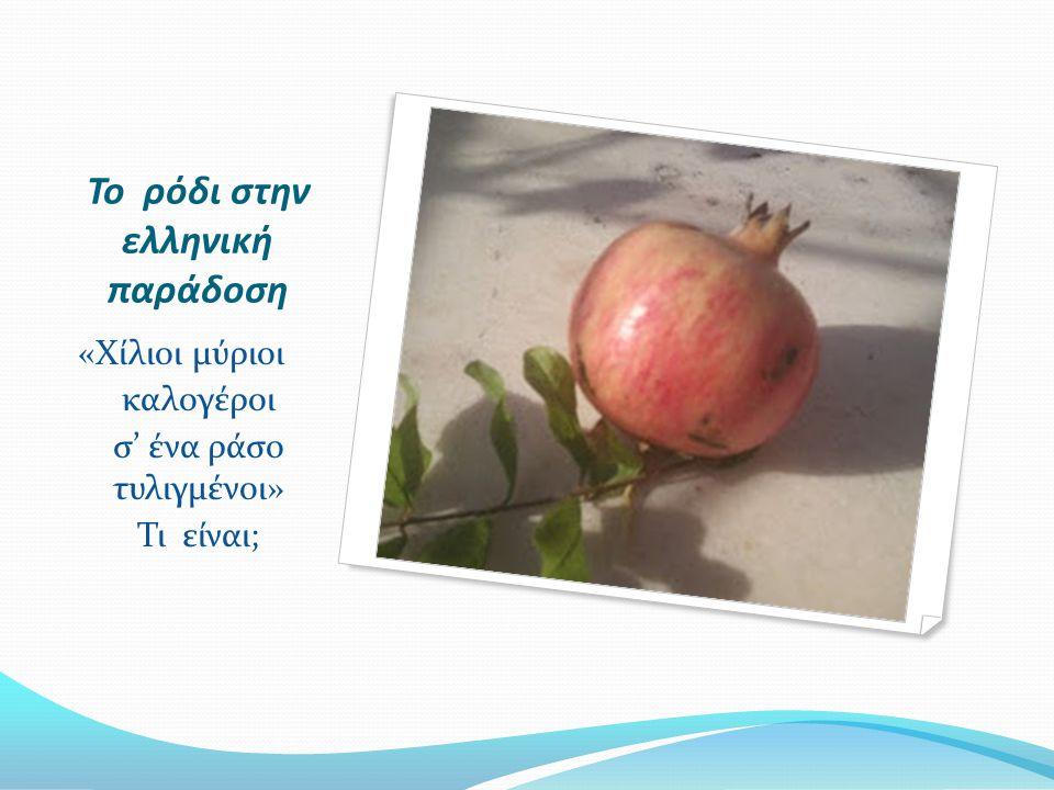 Το ρόδι στην ελληνική παράδοση «Χίλιοι μύριοι καλογέροι σ' ένα ράσο τυλιγμένοι» Τι είναι;