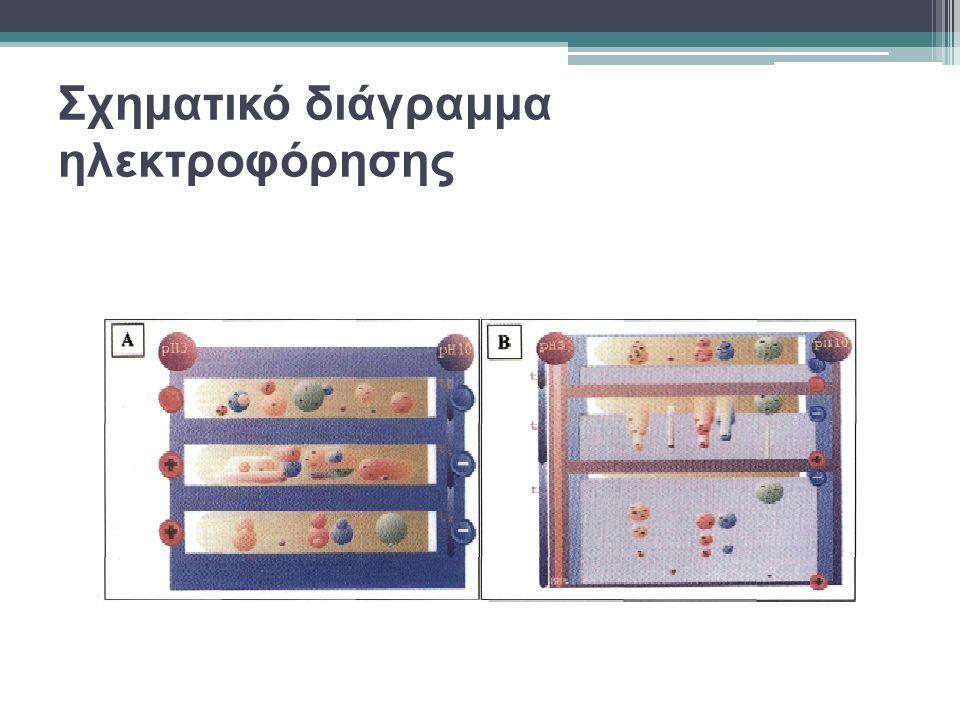 Πρωτεωμική ανάλυση Βιολογικά δείγματα που υποβάλλονται σε πρωτεωμική ανάλυση • βιολογικά υγρά • κυτταρικοί πληθυσμοί • ιστοί Στάδια πρωτεωμικής ανάλυσης • συλλογή του δείγματος • κατεργασία του δείγματος • διαχωρισμός των πρωτεϊνών • ταυτοποίηση των πρωτεϊνών • επεξεργασία των δεδομένων με • τη βοήθεια της πληροφορικής Όλα αυτά τα δείγματα είναι εξαιρετικά πολυσύνθετα, λόγω της πολυδιάστατης σύστασης των πρωτεϊνών τους που διαφέρουν • στην κυτταρική και υπο-κυτταρική κατανομή τους • στην παρουσία τους ως συμπλέγματα • στο φορτίο τους • στη μοριακή μάζα • στην υδροφοβικότητα, • στα επίπεδα έκφρασής τους • στις μετα-μεταφραστικές επεξεργασίες που έχουν υποστεί