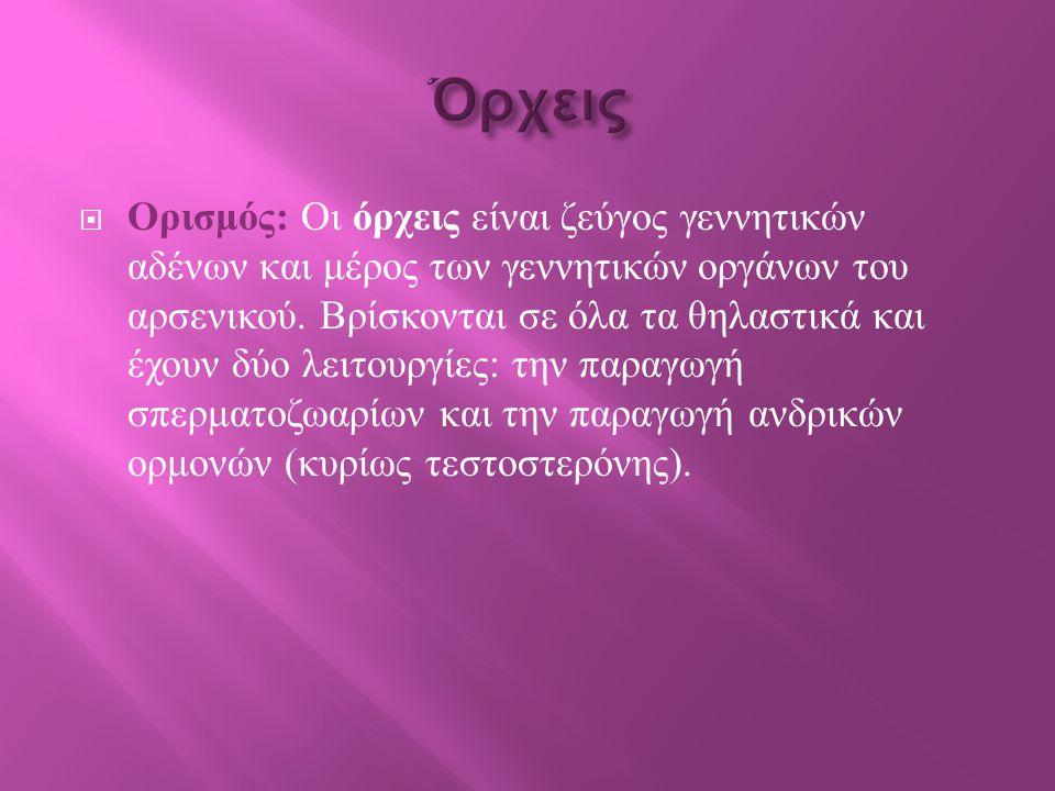  Ορισμός : Οι όρχεις είναι ζεύγος γεννητικών αδένων και μέρος των γεννητικών οργάνων του αρσενικού.