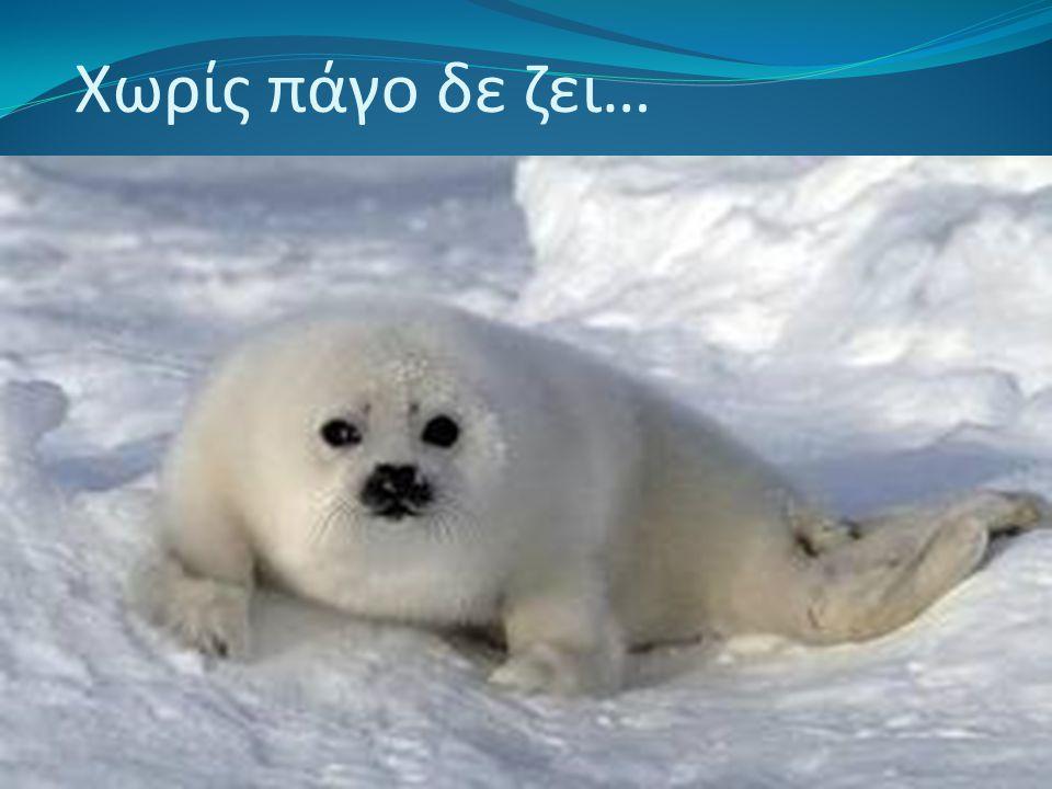 Χωρίς πάγο δε ζει…