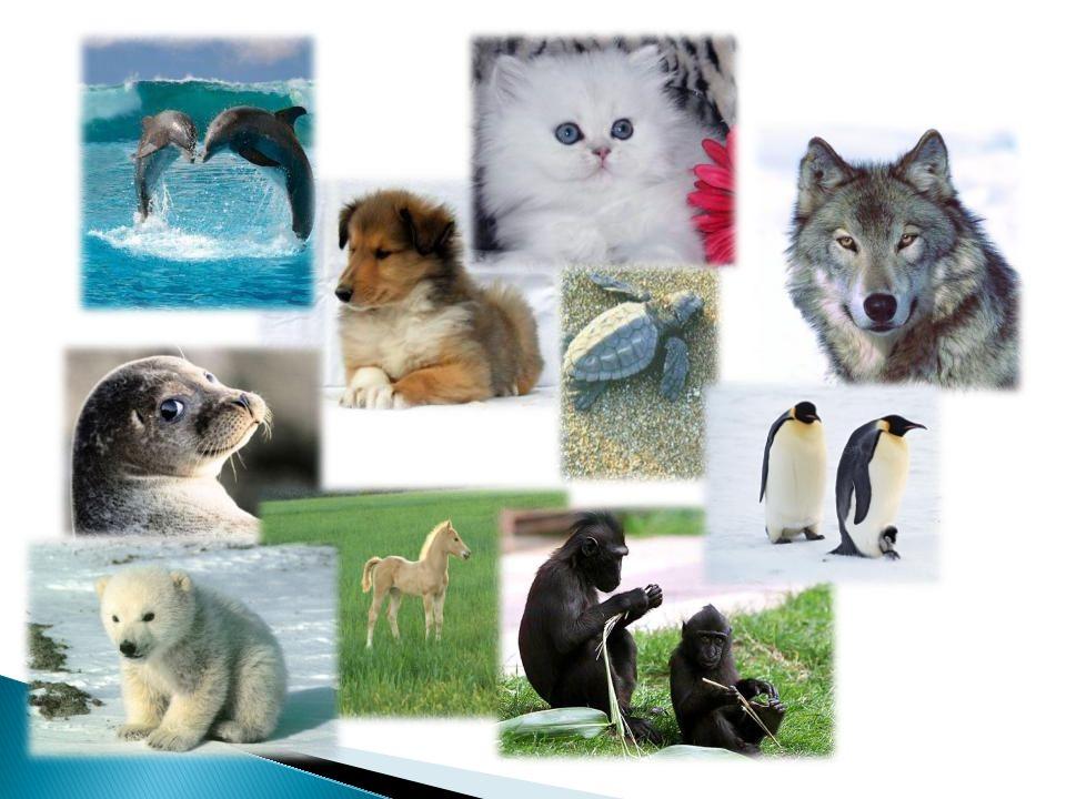 Η γάτα ανήκει στην οικογένεια των Αιλουροειδών.Η γάτα κυνηγά πάνω από 1.000 είδη ζώων για τροφή.