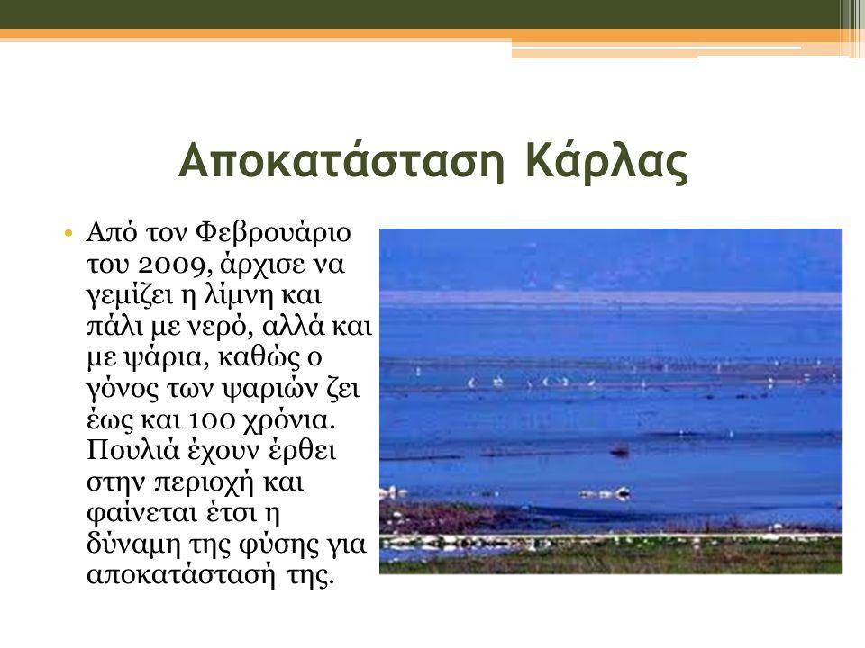 Αποκατάσταση Κάρλας •Από τον Φεβρουάριο του 2009, άρχισε να γεμίζει η λίμνη και πάλι με νερό, αλλά και με ψάρια, καθώς ο γόνος των ψαριών ζει έως και 100 χρόνια.