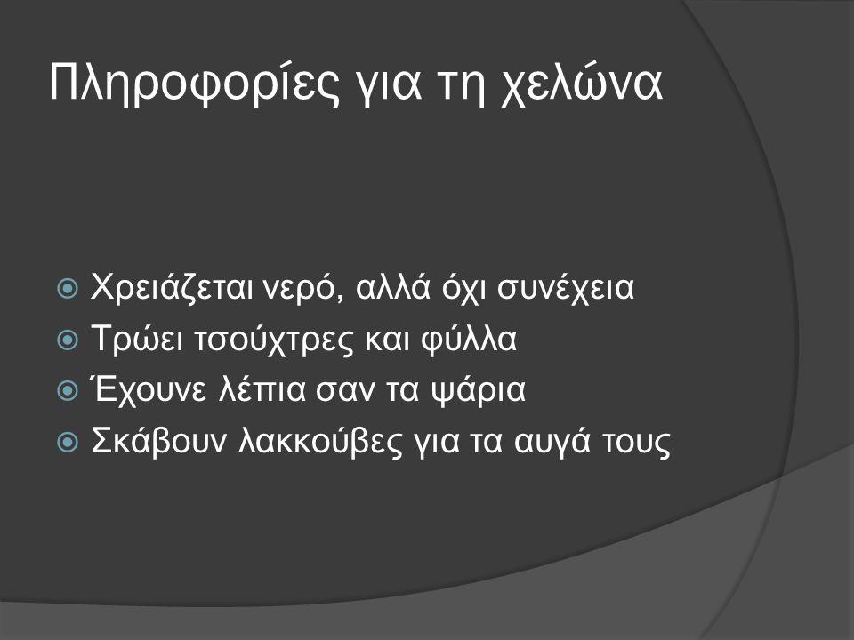 Νούτσος