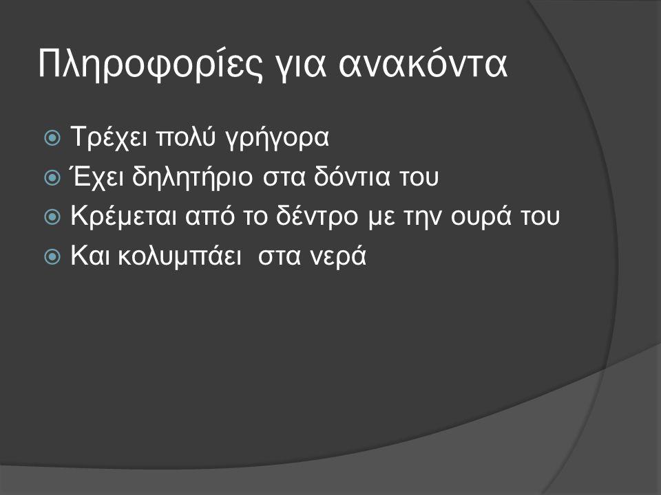ΧΤΑΠΟΔΙΑ