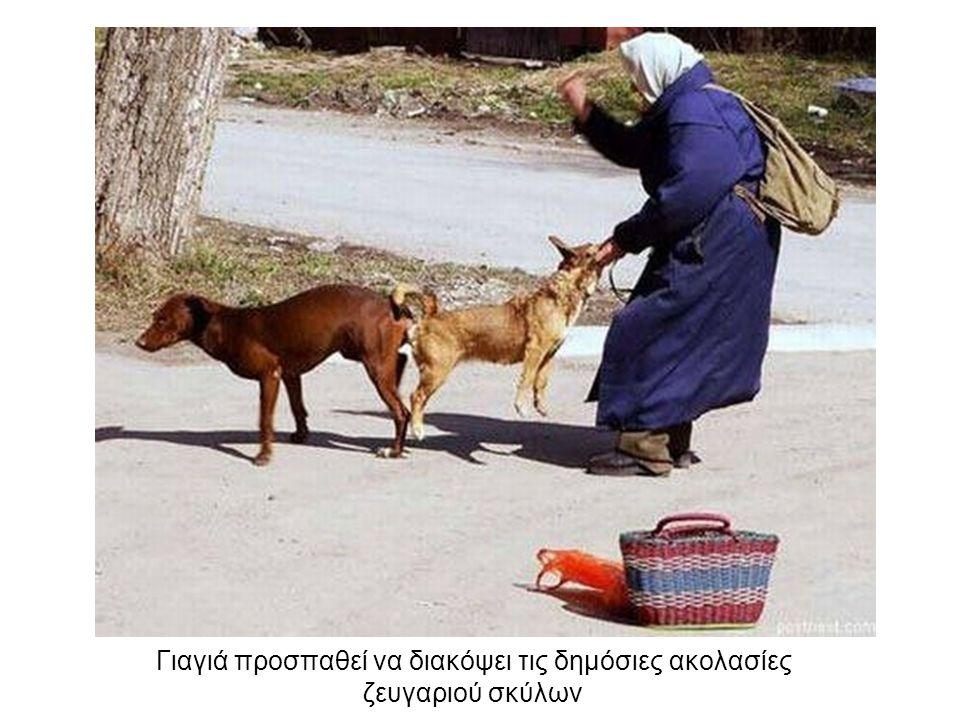 Γιαγιά προσπαθεί να διακόψει τις δημόσιες ακολασίες ζευγαριού σκύλων