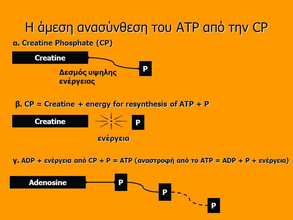 Η άμεση ανασύνθεση του ATP από την CP Creatine P Creatine P ενέργεια Δεσμός υψηλης ενέργειας Creatine Phosphate (CP) α.