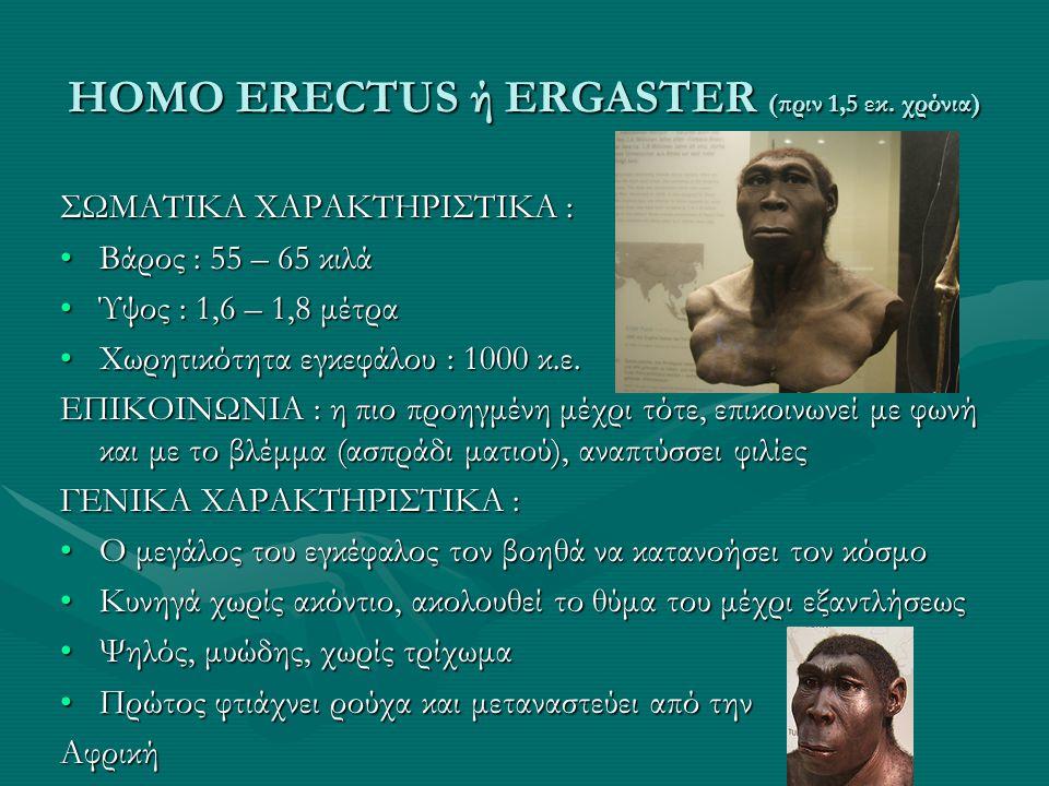 HOMO ERECTUS ή ERGASTER (πριν 1,5 εκ. χρόνια) ΣΩΜΑΤΙΚΑ ΧΑΡΑΚΤΗΡΙΣΤΙΚΑ : •Βάρος : 55 – 65 κιλά •Ύψος : 1,6 – 1,8 μέτρα •Χωρητικότητα εγκεφάλου : 1000 κ