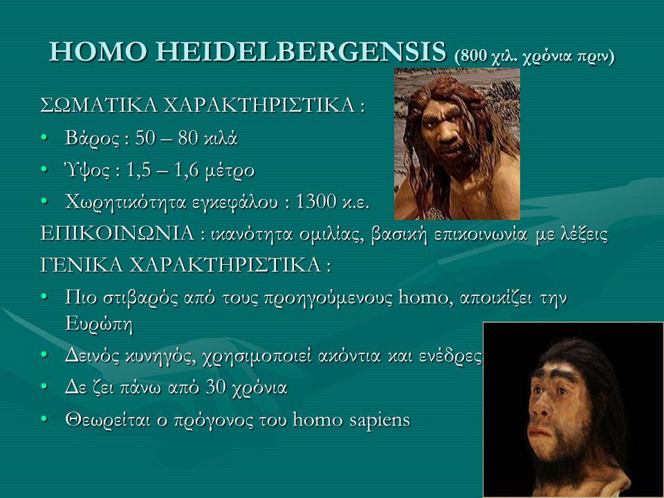HOMO HEIDELBERGENSIS (800 χιλ. χρόνια πριν) ΣΩΜΑΤΙΚΑ ΧΑΡΑΚΤΗΡΙΣΤΙΚΑ : •Βάρος : 50 – 80 κιλά •Ύψος : 1,5 – 1,6 μέτρο •Χωρητικότητα εγκεφάλου : 1300 κ.ε