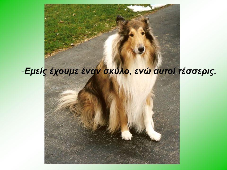 Κόμης Του Δρόμου - Εμείς έχουμε έναν σκύλο, ενώ αυτοί τέσσερις.