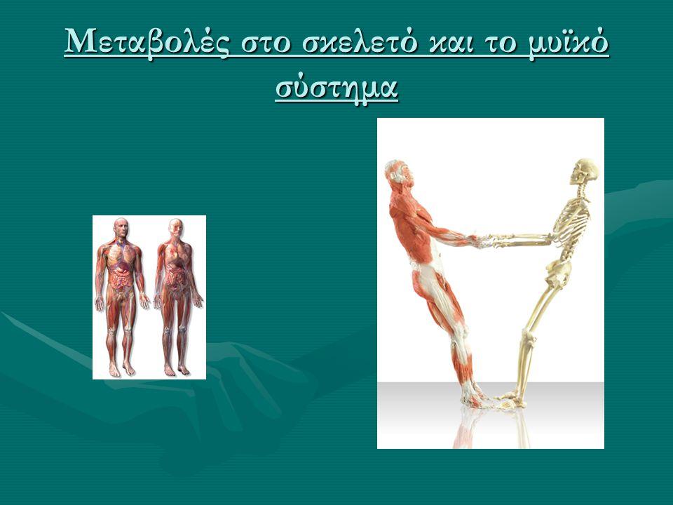 Μεταβολές στο σκελετό και το μυϊκό σύστημα