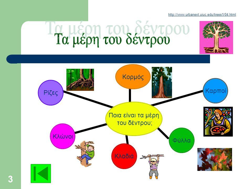 2 1.Ποια είναι τα μέρη του δέντρου; ΣΕΛ 3 2.