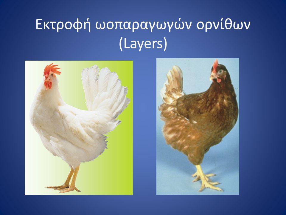 Εκτροφή ωοπαραγωγών ορνίθων (Layers)