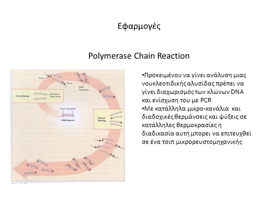 Εφαρμογές Polymerase Chain Reaction • Προκειμένου να γίνει ανάλυση μιας νουκλεοτιδικής αλυσίδας πρέπει να γίνει διαχωρισμός των κλώνων DNA και ενίσχυσ