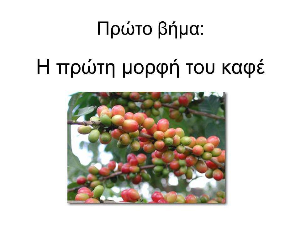 Πρώτο βήμα: Η πρώτη μορφή του καφέ