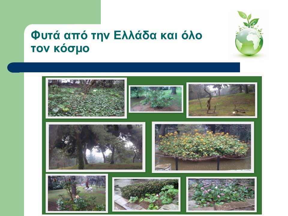 Φυτά από την Ελλάδα και όλο τον κόσμο
