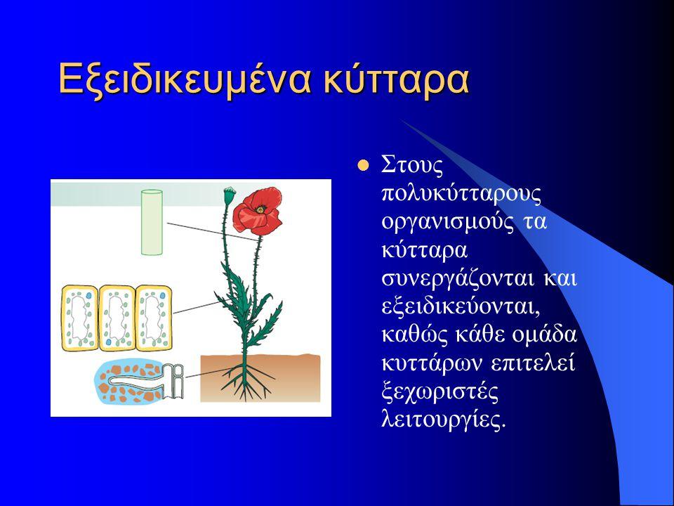 Εξειδικευμένα κύτταρα  Στους πολυκύτταρους οργανισμούς τα κύτταρα συνεργάζονται και εξειδικεύονται, καθώς κάθε ομάδα κυττάρων επιτελεί ξεχωριστές λει