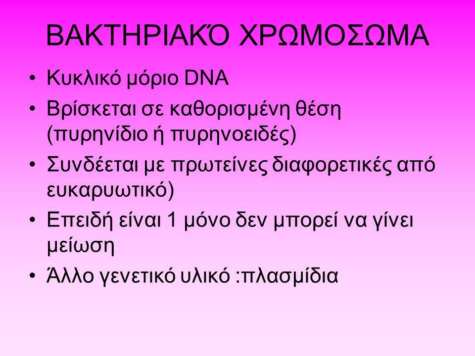 ΒΑΚΤΗΡΙΑΚΌ ΧΡΩΜΟΣΩΜΑ •Kυκλικό μόριο DNA •Βρίσκεται σε καθορισμένη θέση (πυρηνίδιο ή πυρηνοειδές) •Συνδέεται με πρωτείνες διαφορετικές από ευκαρυωτικό)