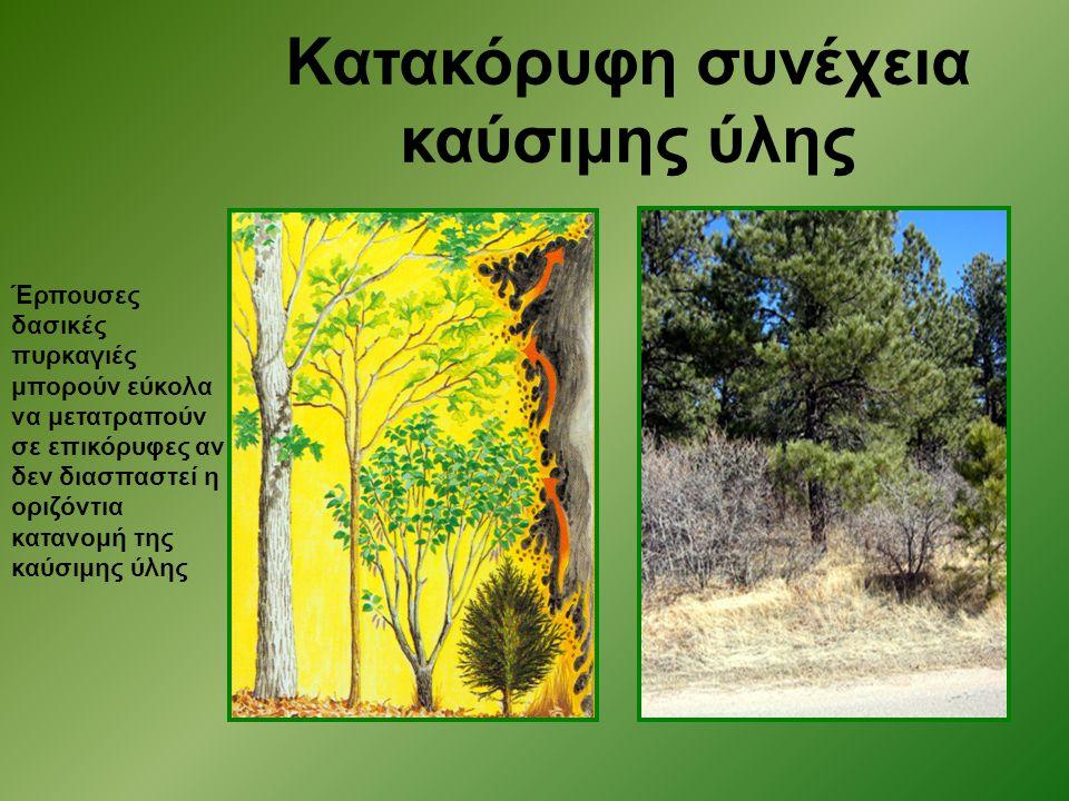 Έρπουσες δασικές πυρκαγιές μπορούν εύκολα να μετατραπούν σε επικόρυφες αν δεν διασπαστεί η οριζόντια κατανομή της καύσιμης ύλης Κατακόρυφη συνέχεια κα