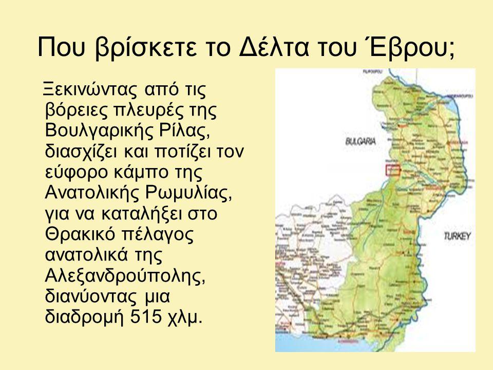 Που βρίσκετε το Δέλτα του Έβρου; Ξεκινώντας από τις βόρειες πλευρές της Βουλγαρικής Ρίλας, διασχίζει και ποτίζει τον εύφορο κάμπο της Ανατολικής Ρωμυλίας, για να καταλήξει στο Θρακικό πέλαγος ανατολικά της Αλεξανδρούπολης, διανύοντας μια διαδρομή 515 χλμ.
