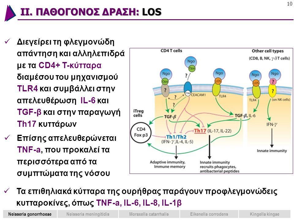 ΙΙ. ΠΑΘΟΓΟΝΟΣ ΔΡΑΣΗ: LOS 10  Διεγείρει τη φλεγμονώδη απάντηση και αλληλεπιδρά με τα CD4+ T-κύτταρα διαμέσου του μηχανισμού TLR4 και συμβάλλει στην απ
