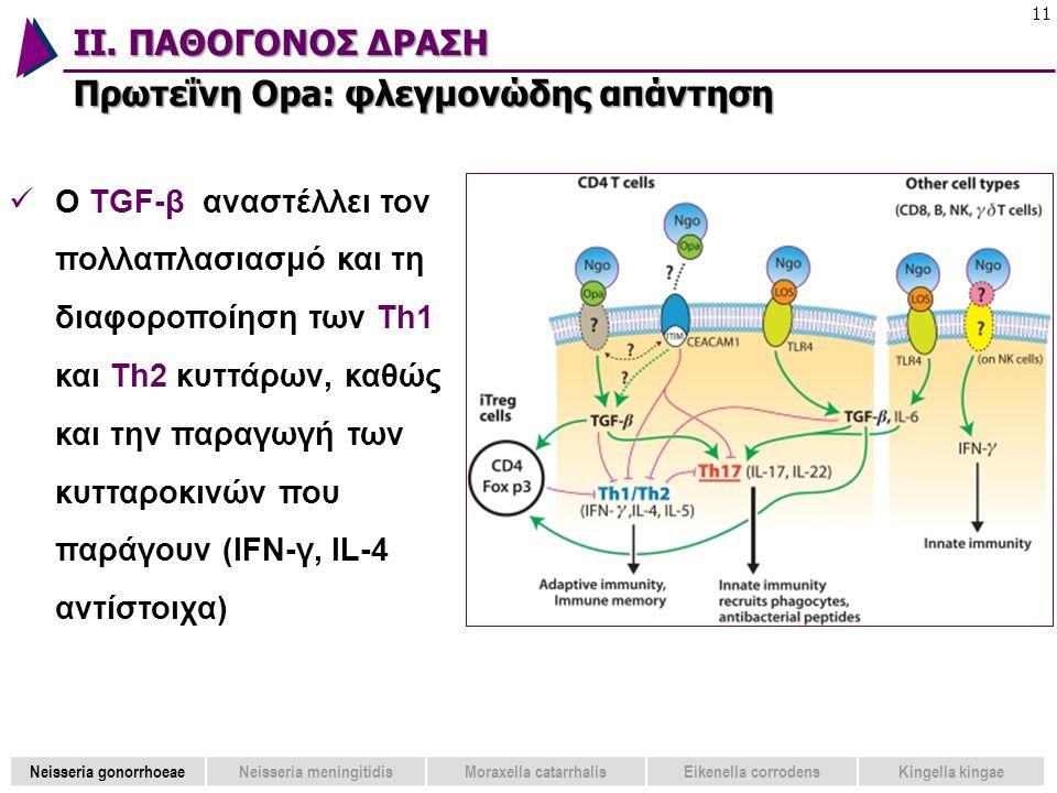ΙΙ. ΠΑΘΟΓΟΝΟΣ ΔΡΑΣΗ Πρωτεΐνη Opa: φλεγμονώδης απάντηση 11  Ο TGF-β αναστέλλει τον πολλαπλασιασμό και τη διαφοροποίηση των Th1 και Th2 κυττάρων, καθώς