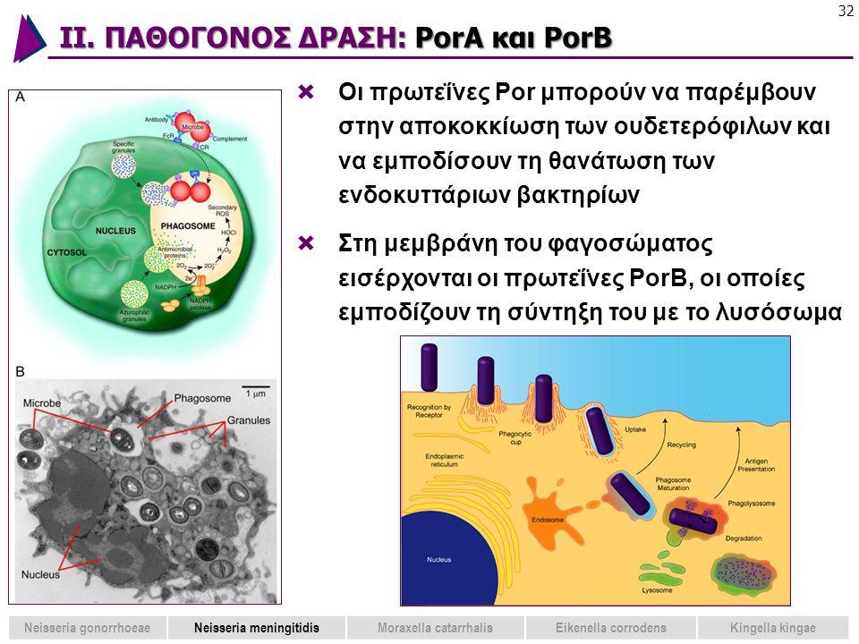 ΙΙ. ΠΑΘΟΓΟΝΟΣ ΔΡΑΣΗ: PorA και PorB 32  Oι πρωτεΐνες Por μπορούν να παρέμβουν στην αποκοκκίωση των ουδετερόφιλων και να εμποδίσουν τη θανάτωση των ενδ