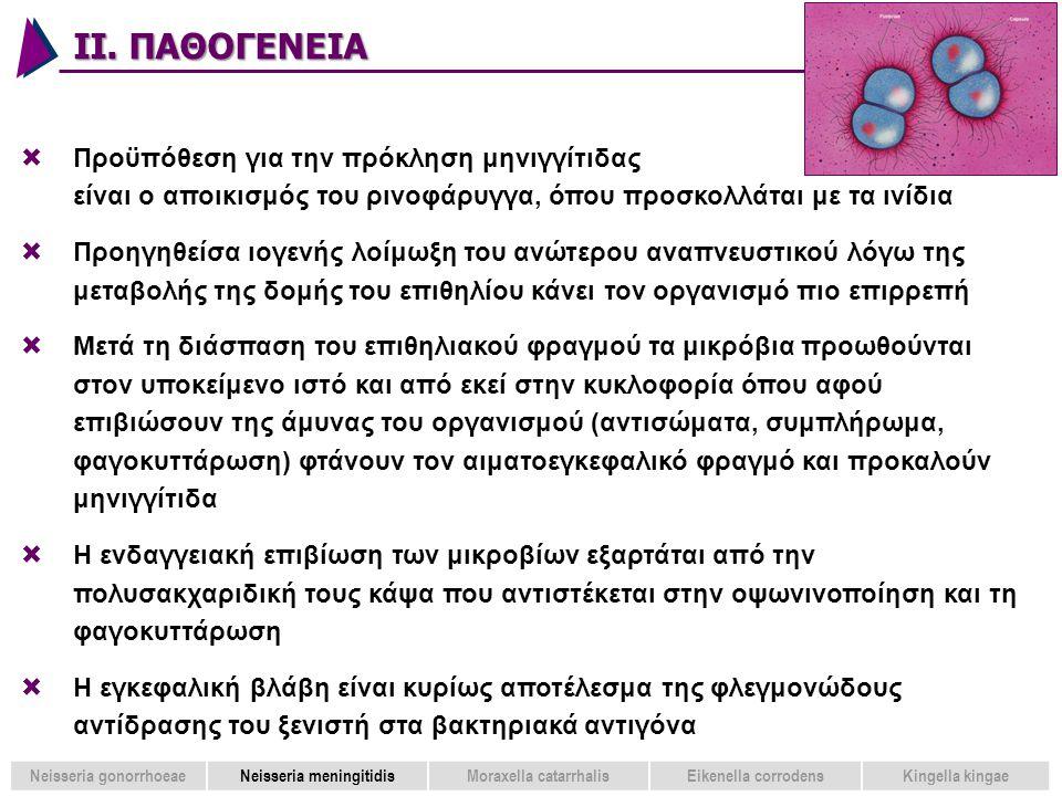 ΙΙ. ΠΑΘΟΓΕΝΕΙΑ 34  Προϋπόθεση για την πρόκληση μηνιγγίτιδας είναι ο αποικισμός του ρινοφάρυγγα, όπου προσκολλάται με τα ινίδια  Προηγηθείσα ιογενής