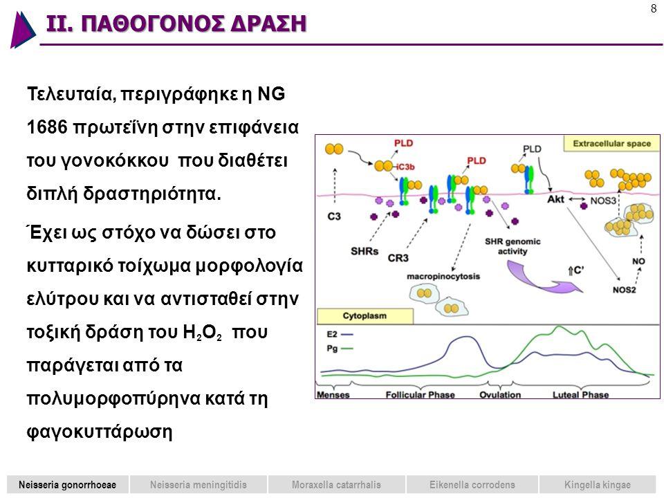 ΙΙ. ΠΑΘΟΓΟΝΟΣ ΔΡΑΣΗ 8 Τελευταία, περιγράφηκε η NG 1686 πρωτεΐνη στην επιφάνεια του γονοκόκκου που διαθέτει διπλή δραστηριότητα. Έχει ως στόχο να δώσει