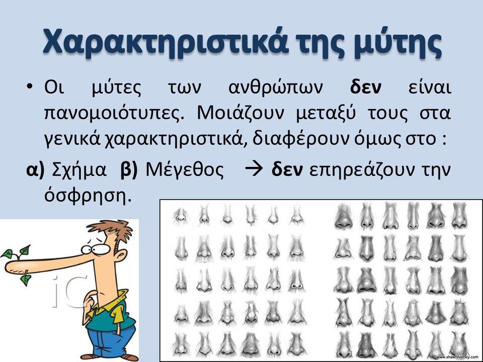 • Οι μύτες των ανθρώπων δεν είναι πανομοιότυπες. Μοιάζουν μεταξύ τους στα γενικά χαρακτηριστικά, διαφέρουν όμως στο : α) Σχήμα β) Μέγεθος  δεν επηρεά