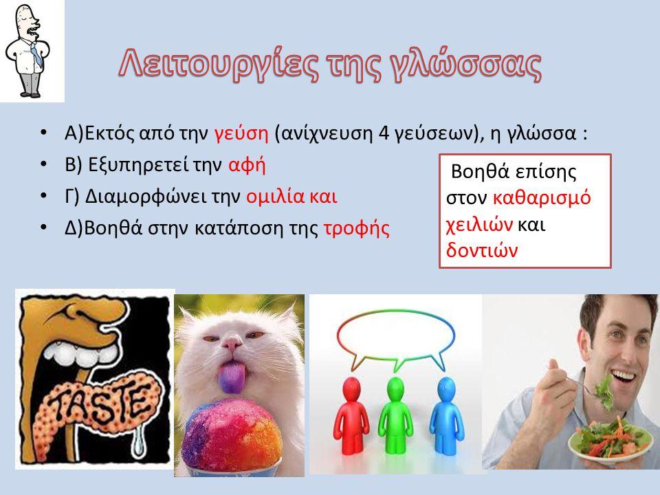• Α)Εκτός από την γεύση (ανίχνευση 4 γεύσεων), η γλώσσα : • Β) Εξυπηρετεί την αφή • Γ) Διαμορφώνει την ομιλία και • Δ)Βοηθά στην κατάποση της τροφής Β