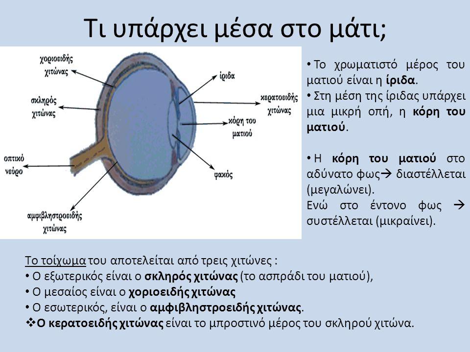 Τι υπάρχει μέσα στο μάτι; Tο τοίχωμα του αποτελείται από τρεις χιτώνες : • Ο εξωτερικός είναι ο σκληρός χιτώνας (το ασπράδι του ματιού), • O μεσαίος ε