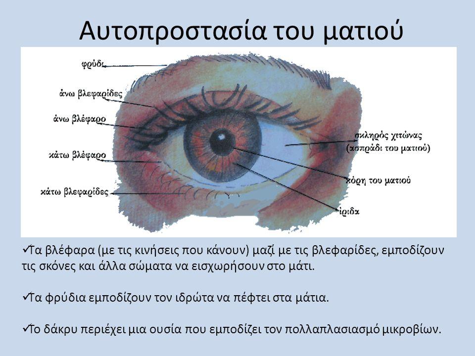 Αυτοπροστασία του ματιού  Τα βλέφαρα (με τις κινήσεις που κάνουν) μαζί με τις βλεφαρίδες, εμποδίζουν τις σκόνες και άλλα σώματα να εισχωρήσουν στο μά