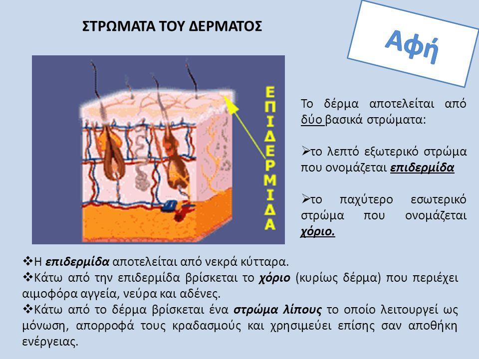 ΣΤΡΩΜΑΤΑ ΤΟΥ ΔΕΡΜΑΤΟΣ Το δέρμα αποτελείται από δύο βασικά στρώματα:  το λεπτό εξωτερικό στρώμα που ονομάζεται επιδερμίδα  το παχύτερο εσωτερικό στρώ