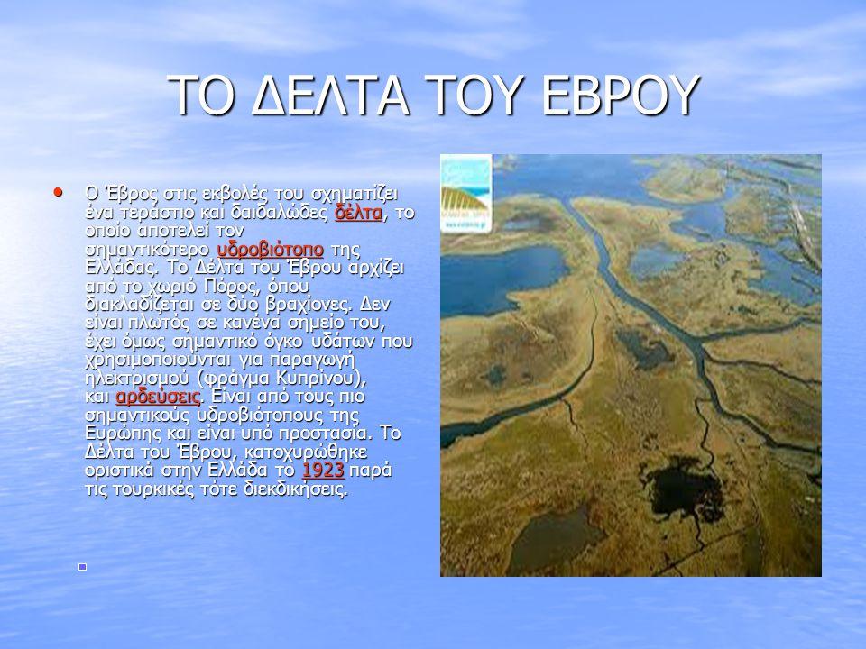 ΤΟ ΔΕΛΤΑ ΤΟΥ ΕΒΡΟΥ • Ο Έβρος στις εκβολές του σχηματίζει ένα τεράστιο και δαιδαλώδες δέλτα, το οποίο αποτελεί τον σημαντικότερο υδροβιότοπο της Ελλάδα