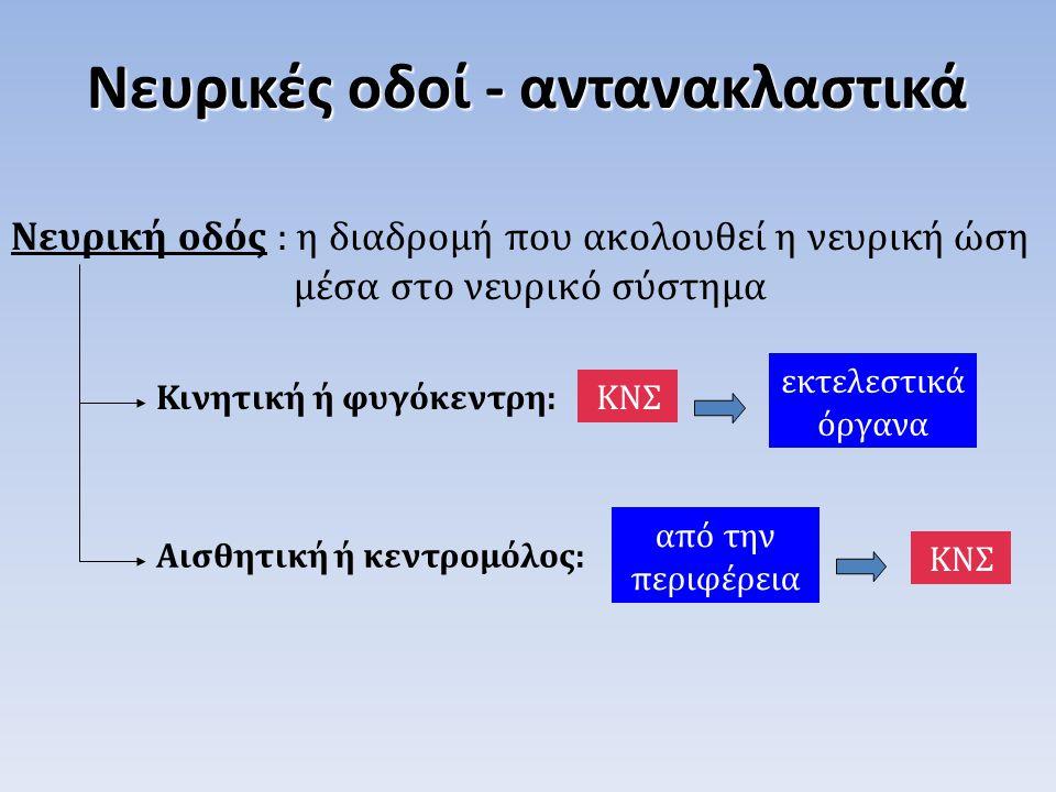 Νευρικές οδοί - αντανακλαστικά Νευρική οδός : η διαδρομή που ακολουθεί η νευρική ώση μέσα στο νευρικό σύστημα ΚΝΣΚινητική ή φυγόκεντρη: εκτελεστικά όρ