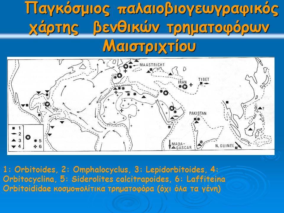Παγκόσμιος παλαιοβιογεωγραφικός χάρτης βενθικών τρηματοφόρων Μαιστριχτίου Παγκόσμιος παλαιοβιογεωγραφικός χάρτης βενθικών τρηματοφόρων Μαιστριχτίου 1: Orbitoides, 2: Omphalocyclus, 3: Lepidorbitoides, 4: Orbitocyclina, 5: Siderolites calcitrapoides, 6: Laffiteina Orbitoididae κοσμοπολίτικα τρηματοφόρα (όχι όλα τα γένη)