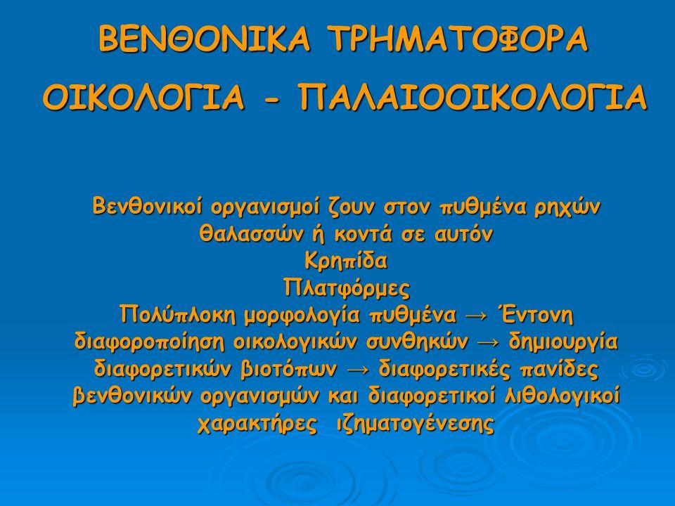 ΜΟΡΦΟΛΟΓΙΑ ΠΛΑΤΦΟΡΜΑΣ