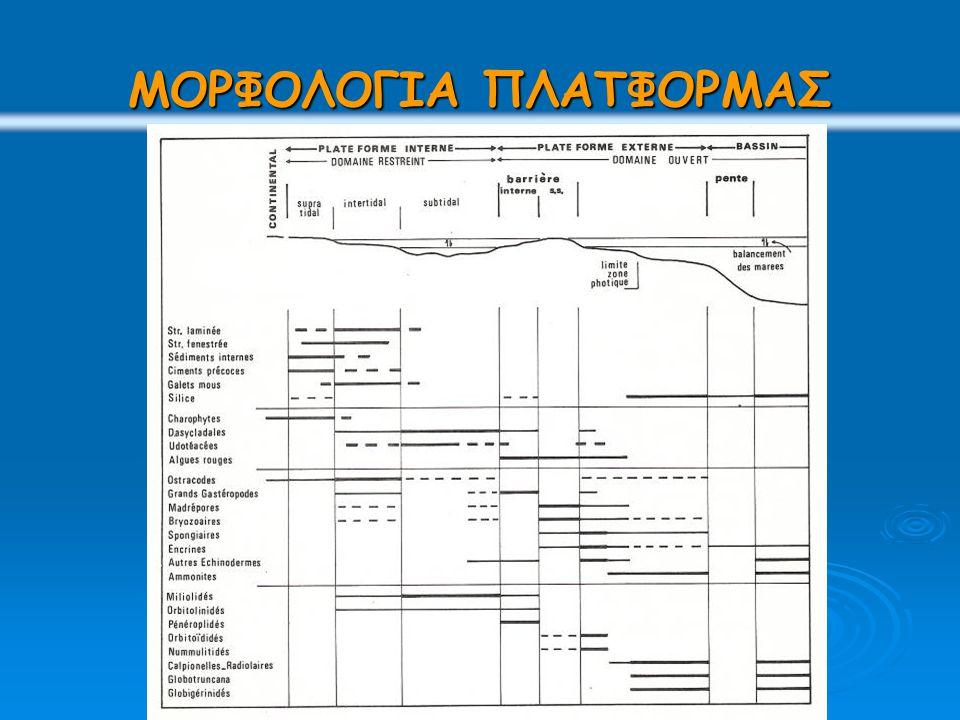 εξωτερική πλατφόρμα 0 – 200μ και κλιτύς προς τις βαθύτερες περιοχές   ιζηματογένεση πυριτικών και ανθρακικών πετρωμάτων   βενθονικοί και πλαγκτονικοί οργανισμοί   Κοντά στην πλατφόρμα απαντούν θραύσματα της πλατφόρμας μαζί με άφθονους βενθονικούς οργανισμούς κυρίως υαλώδη τρηματοφόρα, εχινόδερμα, σπόγγους κ.α.